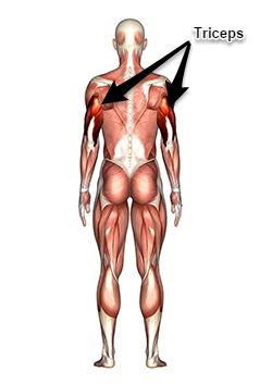Triceps B 250 Flechas